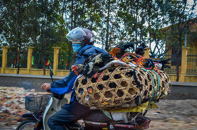 Hanoi, Vietnam - Bringing home the Groceries