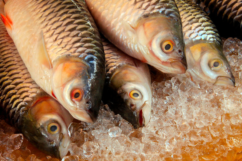 Fresh Fish - Borneo