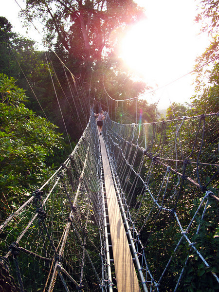 Hanging Bridges - Borneo