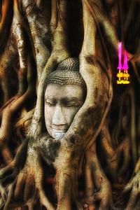 Buddha in Tree - Bangkok