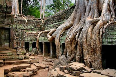 Ta Prohm at Ankor Wat, Siem Reap, Cambodia