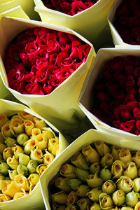 Roses for Sale  - Thailand