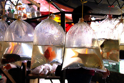 Fish Sale - Borneo