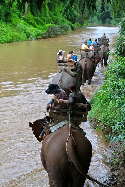 Chiang-Dao Elephant Training Center