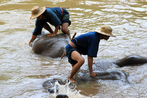 Chiang-Dao Elephant Training Center