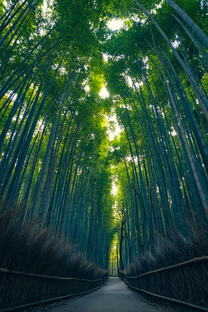 Color & Depth in Arashiyama