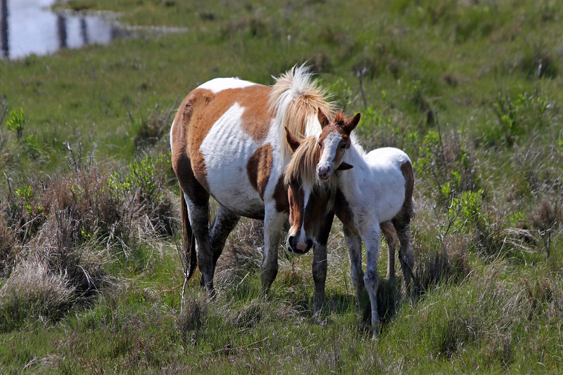 A mare and a colt share a moment.