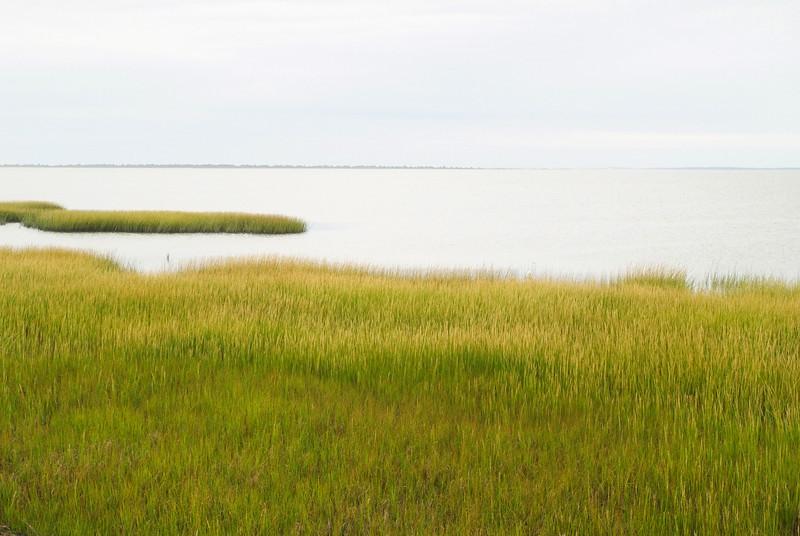 USA-Virginia-Assateague Island-salt marsh-Tom's Cove
