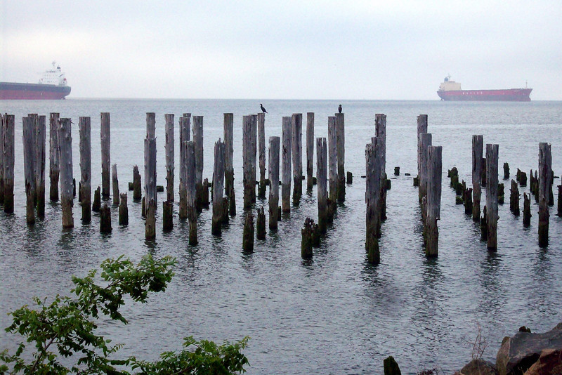 There are old pilings all along the riverfront, marking the locations of the many canneries that used to be here.