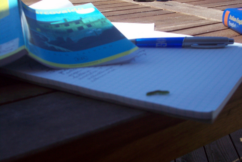 Studying Italian on the back porch, caterpillar joins in.