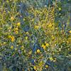 Yellows at the desert