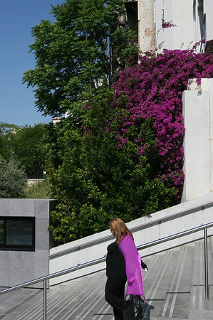 Matching Purple Near the Entrance of The New Museum of Acropolis, Athens, Greece