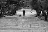 Dog walk, Athens, Greece