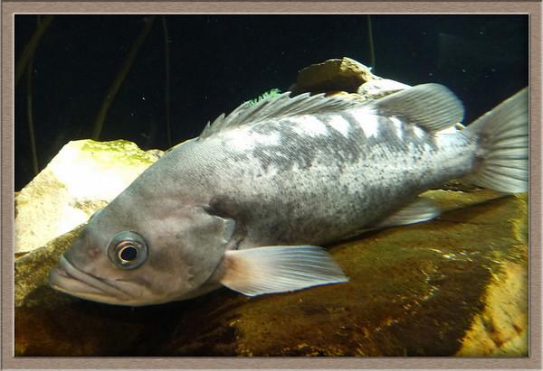Travel to Atlanta visit Coca-cola museum Aquarium