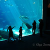 <p>Aquarium, Atlanta, Georgia, USA</p>