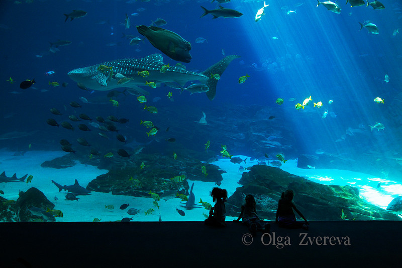 <p>Aquarium, Atlanta, Georgia, USA</p>