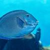 Blue Colored Fish