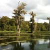 Larry took, us a park where we took a river tour.