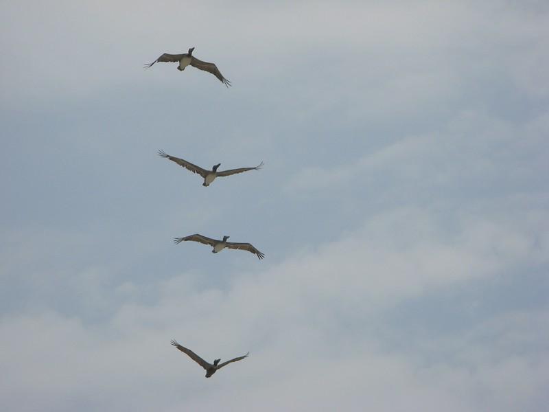 Birds on Wing