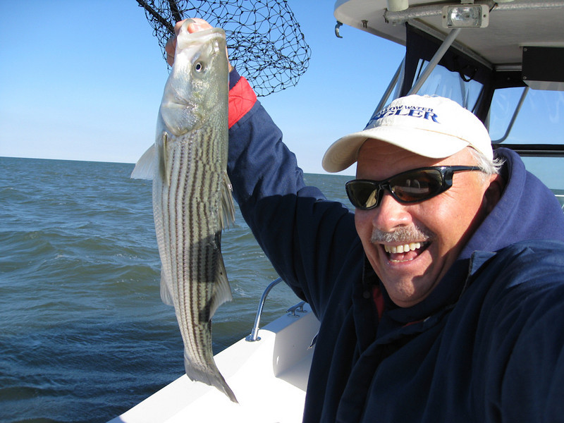 one of many  Stripers caught on the 'Rosie'