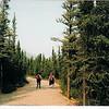 Walking in Denali