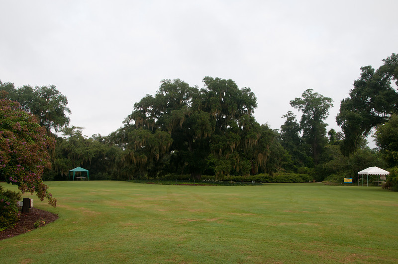 Airlie Gardens - Airlie Oak estimated to be 465 years old