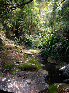 Pretty rainforest view on a hike in Lamington National Park!