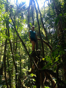 Climbing on vines in the rainforest!
