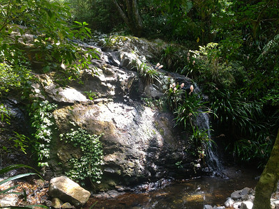 One of many waterfalls on the Coomera Falls Track which was possibly the most amazing hike I have ever done!