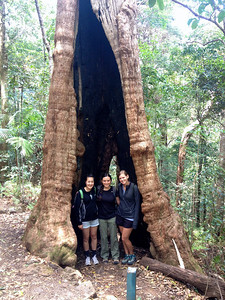 Huge tree hollowed out by fire on one of our hikes for Coastal Forest Ecosystems Terrestrial
