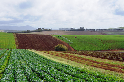 Rolling fields of rich soil in northern Tasmania, near Devonport
