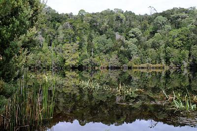 Whyte River, western Tasmania