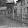 BW Auschwitz Barbed Wire15