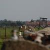 Birkenau wire shot1