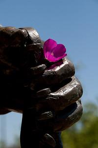 A Flower for Stevie