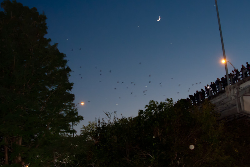 Lots of bats, and people watching them.