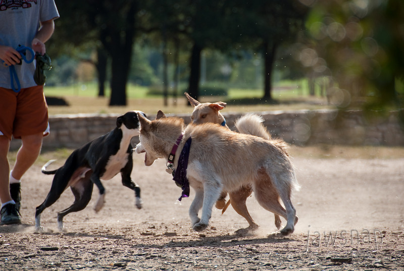 """<span id=""""title"""">Doggies</span> A large dog park is a popular place along Town Lake, even when it's 100 degrees. The dogs that jumped into the water didn't seem to mind."""