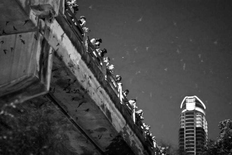 """<span id=""""date"""">_08/15/10_</span> <span id=""""title"""">Bat Watching</span> Austin Trip, Day 3 This photo is of the bats emerging from under the Congress Street Bridge. The colony is the largest urban bat population in North America. People line the bridge at dusk to watch, and various river boats hang out and shine bat-friendly red lights up at them so the humans can see. Apparently tonight was not a good night. On a good night the sky gets black with them. 1.4 million of them! Other fun Austin things we did today included lunch at the Salt Lick and a movie at an Alamo theater. We've had a great time here, but it will be nice to fly tomorrow. It's a lot cooler in LA :)     <a href=""""http://www.jawsnap.net/Daily/year2/7157835_BfJPF#620997885_aQxRL"""">[last year]</a>"""