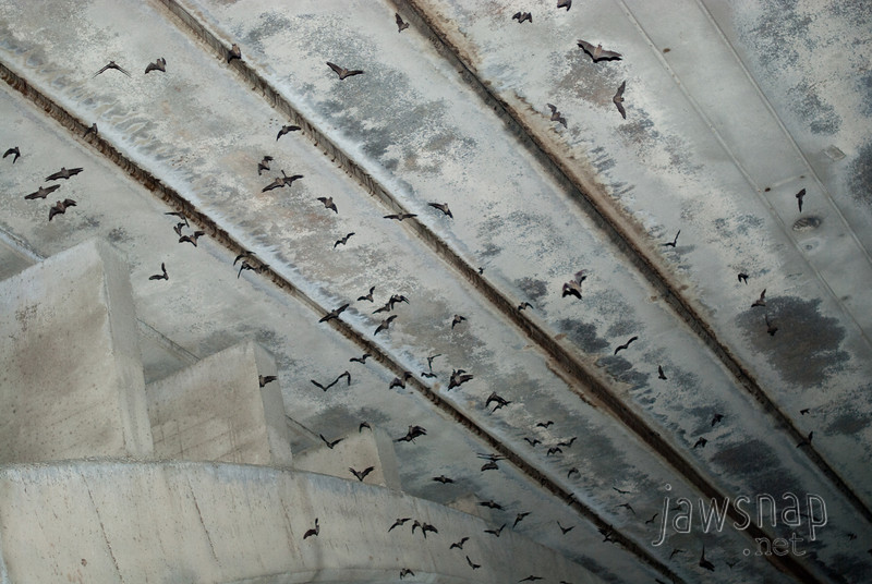 """<span id=""""title"""">Bats!</span> This is what the underside of the Congress Street bridge looks like when you blind the bats with an SB800. I feel kind of bad for disturbing them, but it's a pretty cool shot. Also, there are ~1.4 million bats, so I only disturbed a tiny percentage of them. This is also known as the Bat Bridge, and people line up along it to watch them emerge every evening - the largest urban bat colony in North America. The locals tell me that on a good night (where they all emerge at once), the sky is black with them. Tonight wasn't a 'good' night, but there were still plenty to be seen."""