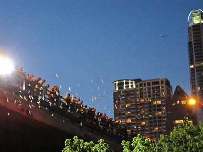 Bats at the Congress Street Bridge