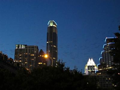 Bats Against the Austin Skyline