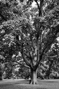 Hilda and Oak Tree