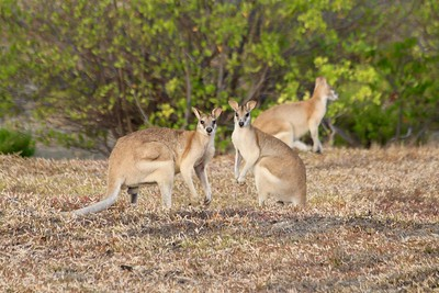 Wildlife. Karumba, Gulf of Carpentaria, Queensland.