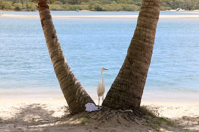 My territory @ Noosa River. Noosa, Sunshine Coast, Queensland, Australië.