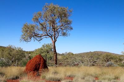 Termietennest @ Dales Gorge. Gorge Rim Walk, Dales Gorge, Karijini NP, Pilbara. WA, Australië.