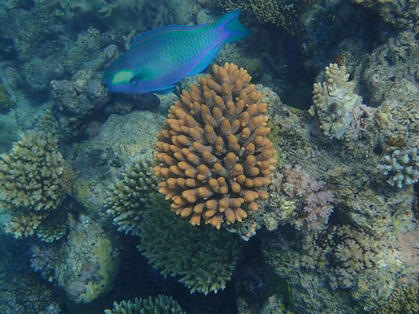 Great Barrier Reef-160057