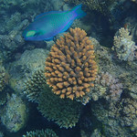 Great Barrier Reef-160057