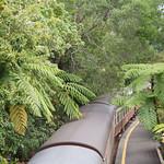scenic railway to Kuranda