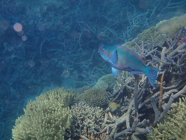 Great Barrier Reef-160080