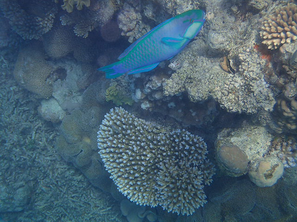 Great Barrier Reef-160053